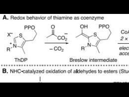 N-杂环卡宾催化醛的脱羧烷基化反应