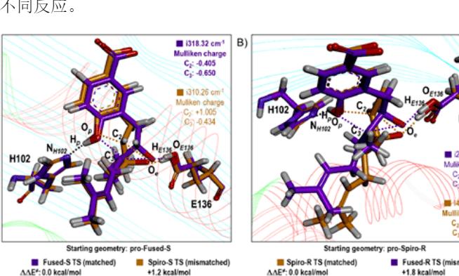 【ACS Catal.】理论计算研究揭示环化酶XimE的双功能特性
