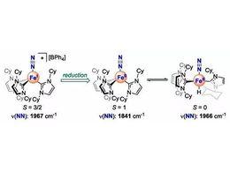 金属有机化合物活化氮气研究取得进展